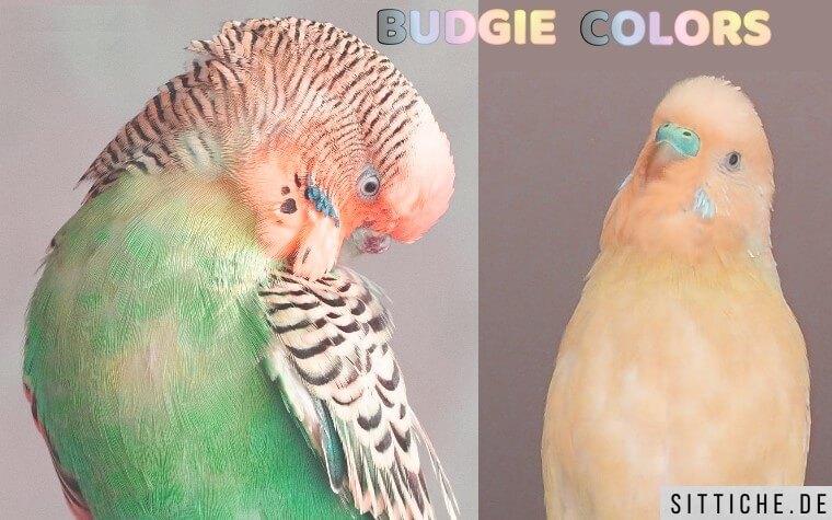 Wellensittich Farben u. Mutationen