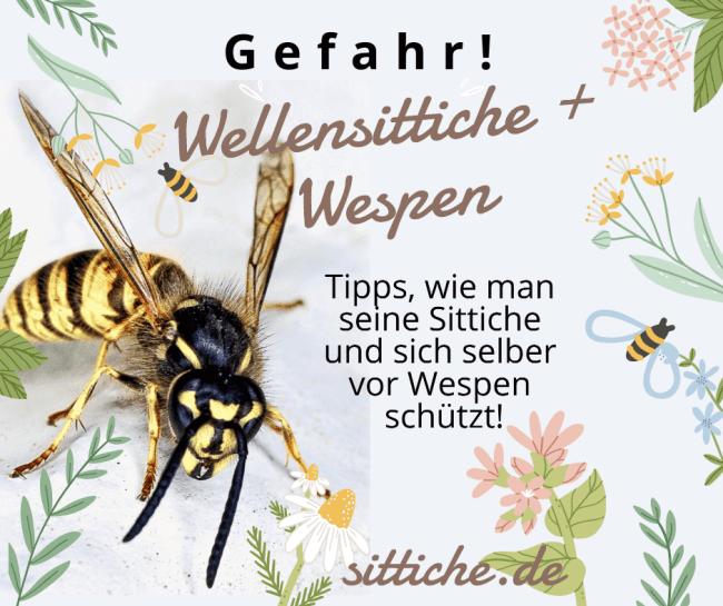 Wellensittiche und Wespen